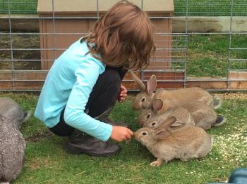 A child pets rabbits at Cook's Country Connection
